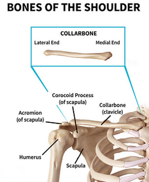 clear depiction of the bone structure surrounding the clavicle or collarbone.photo