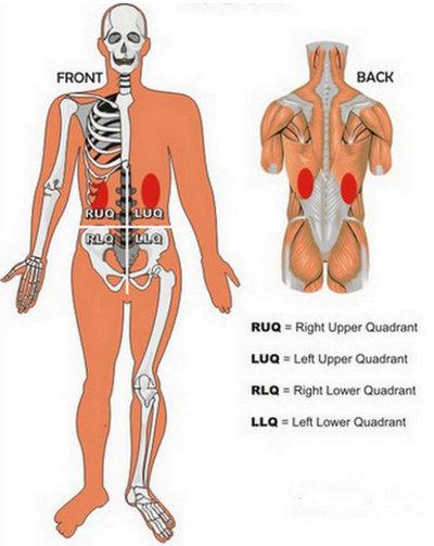 Kidney Pain - (Location, anatomy), lower back, Vs Back ...