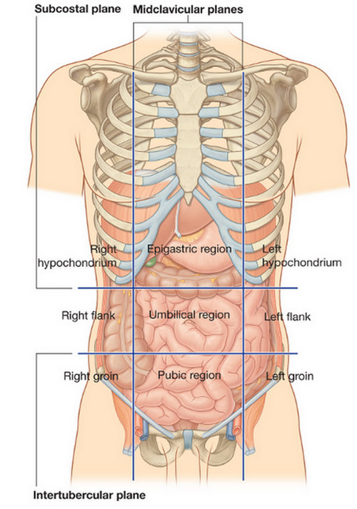 the anatomical areas of the frontal section of the body.image