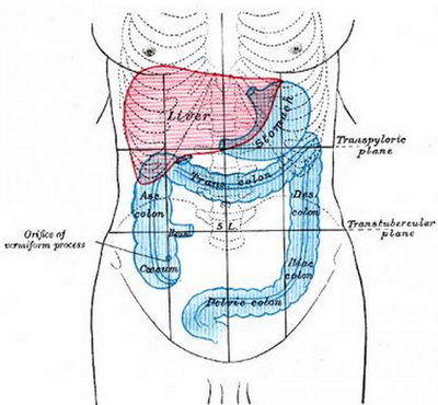 the areas of the colon and how it has the shape of an upside down U.image