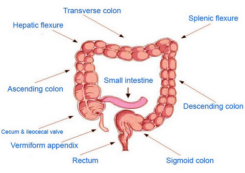 splenic flexure syndrome - location, symptoms, diet, treatment, Human Body