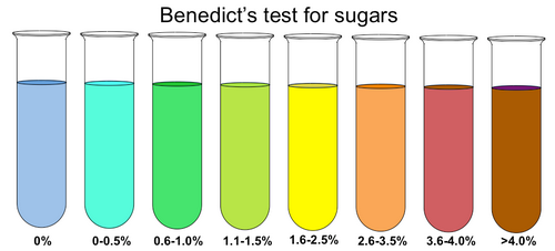 Test tubes containing benedict's solution testing for sugars.photo