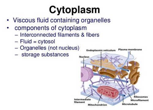 Die Zytoplasma der menschlichen Zelle Bild Foto Bild &quot;Breite =&quot; 500 &quot;Höhe =&quot; 360 &quot;/&gt;</p><div style=